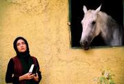 اسب ها همچنان می تازند