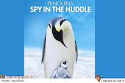 مستند «جاسوسی در قلمرو پنگوئن ها»