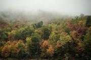 جشنواره فیلم و عکس جنگلهای هیرکانی