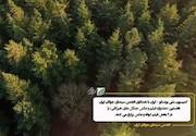نمایشگاه عکس «ثبت جهانی جنگل های هیرکانی»