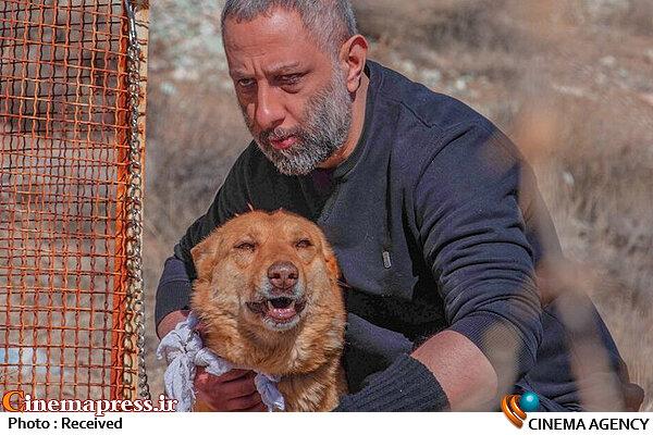 فیلم سینمایی «سگ زرد»